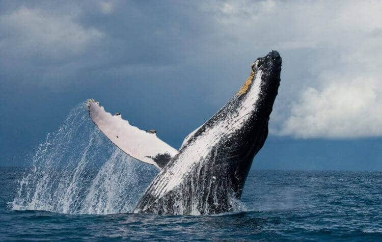 Whales in Maui