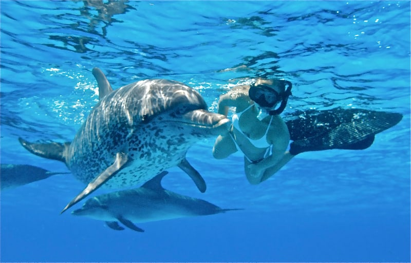 enjoy the beautiful waters of Oahu as you swim with dolphins and other animals